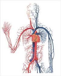 HEART CATH